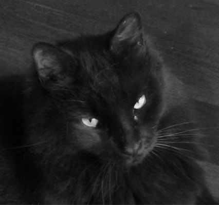 Simba, the recently departed furry kid of Sarah Tuckett Psychotherapy, North Brisbane. Rest in peace sweet lad.