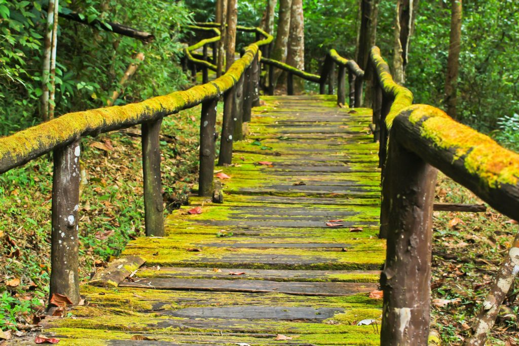 Old wooden bridge through forest - Your therapy journey with Sarah Tuckett Psychotherapy and Counselling North Brisbane