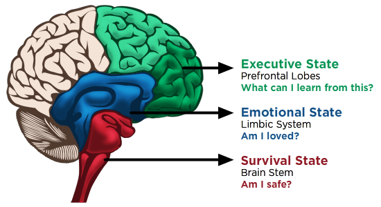 Image of the triune brain - Sarah Tuckett Psychotherapy and Counselling North Brisbane