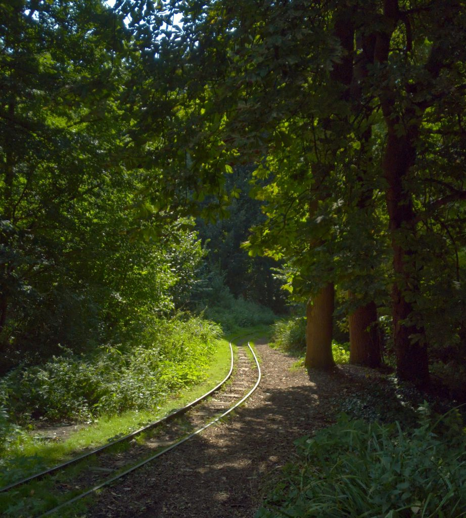 Train track through sunny forest glade - learn about changing your neural pathways with Sarah Tuckett Psychotherapy and Counselling North Brisbane